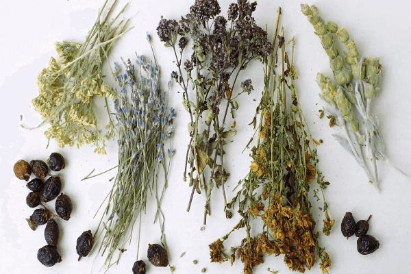 Сухие травы в составе Доктор МОМ<sup>®</sup>