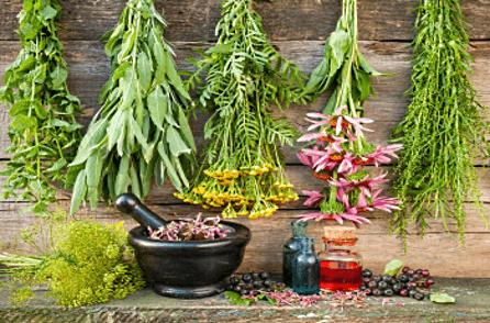 Травы в составе сиропа